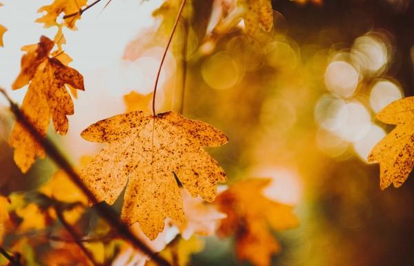 Herbst 140x90cm