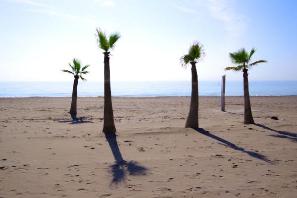 Vier Palmen 140x90cm