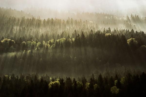 Waldlichter 140x90cm